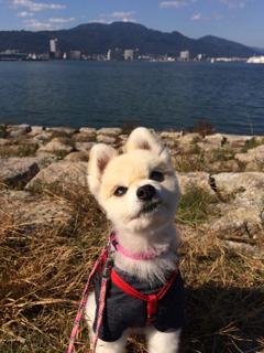 一年ぶりの琵琶湖